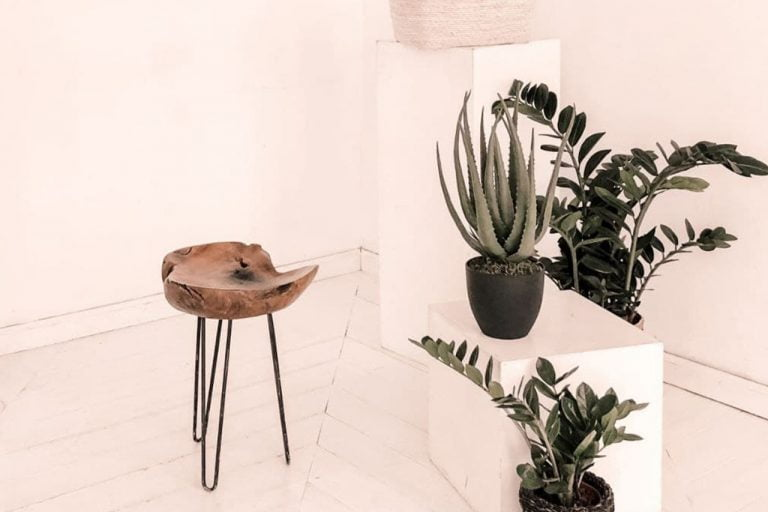 blog-alo-creativo-plantas-diseño-interiores-interiorismo-castellon